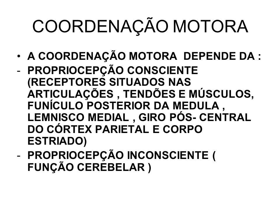 COORDENAÇÃO MOTORA A COORDENAÇÃO MOTORA DEPENDE DA :