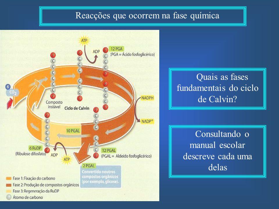 Reacções que ocorrem na fase química