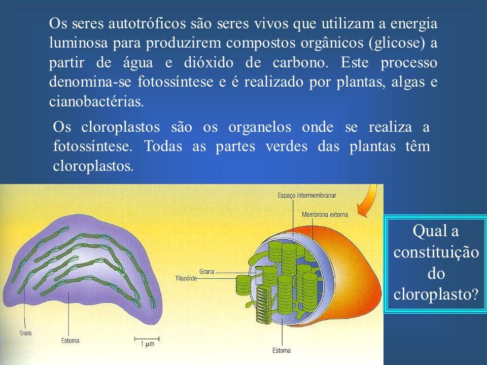 Qual a constituição do cloroplasto