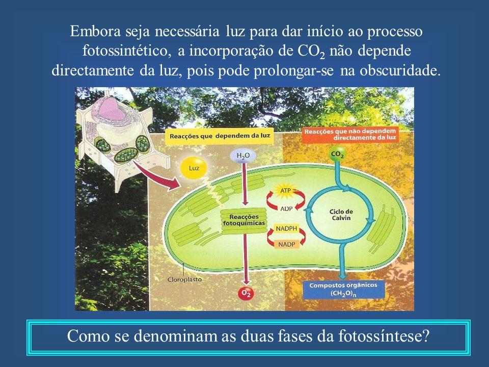 Como se denominam as duas fases da fotossíntese