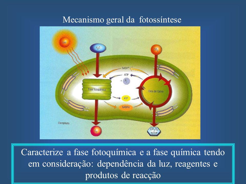 Mecanismo geral da fotossíntese