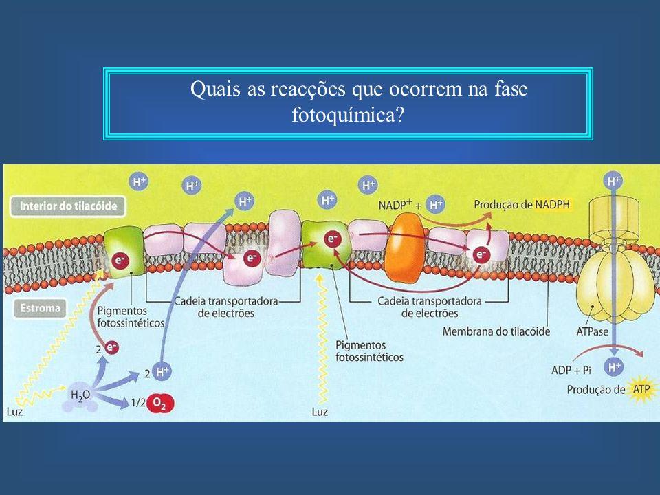 Quais as reacções que ocorrem na fase fotoquímica