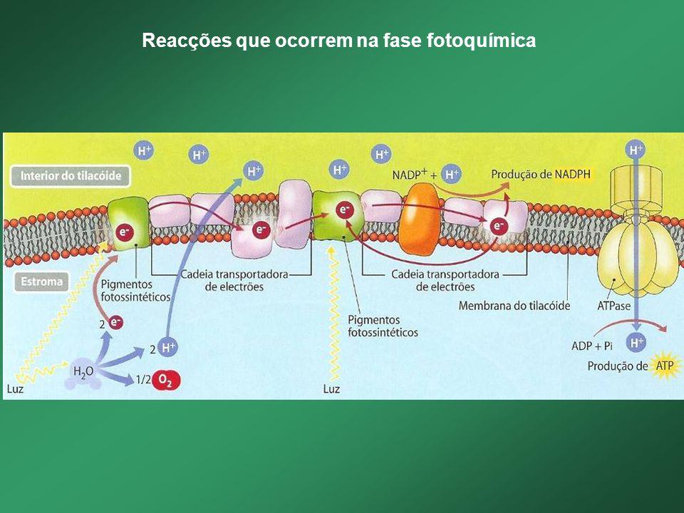 Reacções que ocorrem na fase fotoquímica