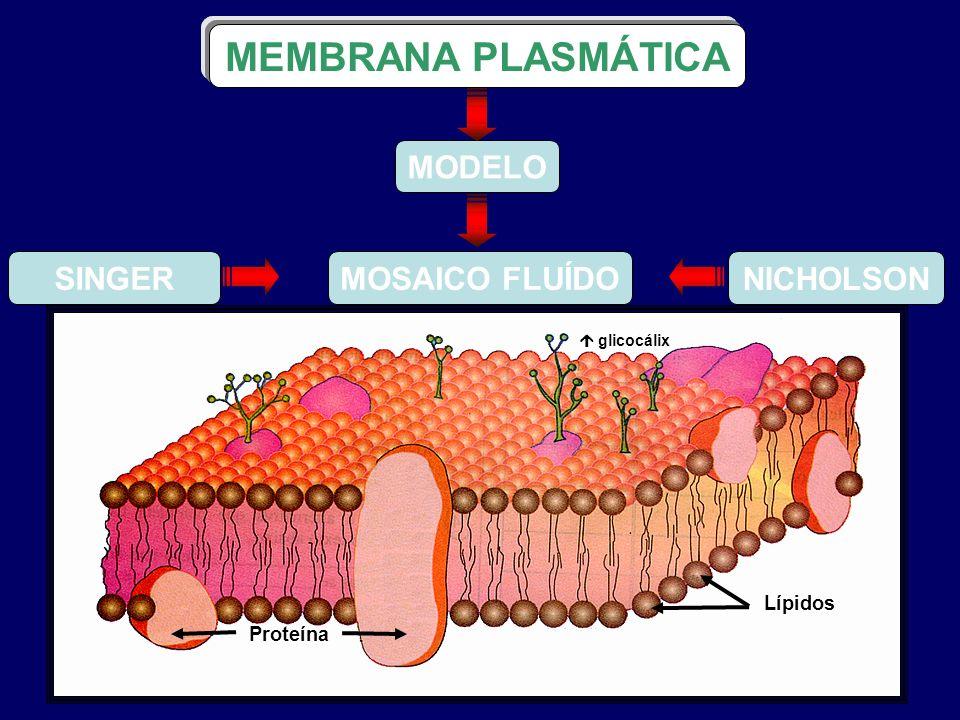 MEMBRANA PLASMÁTICA SINGER NICHOLSON MODELO MOSAICO FLUÍDO Lípidos