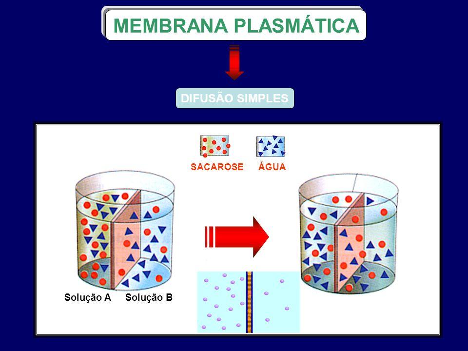 DIFUSÃO SIMPLES MEMBRANA PLASMÁTICA ÁGUA SACAROSE Solução A Solução B