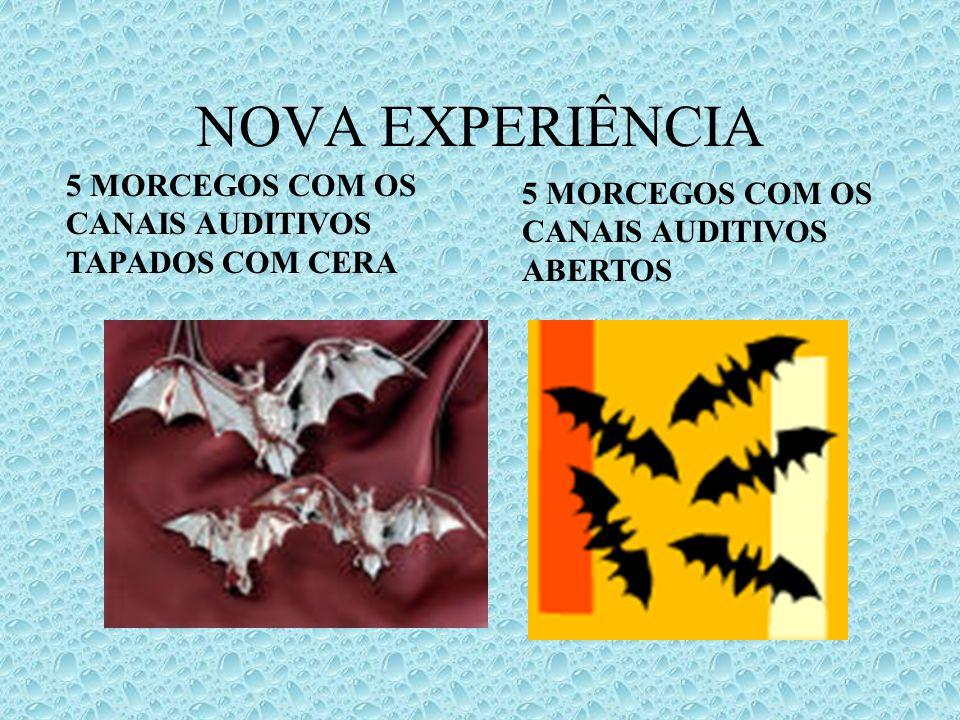 NOVA EXPERIÊNCIA 5 MORCEGOS COM OS CANAIS AUDITIVOS TAPADOS COM CERA