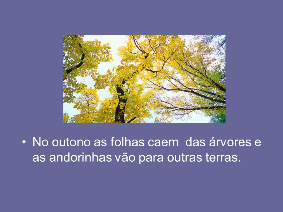 No outono as folhas caem das árvores e as andorinhas vão para outras terras.