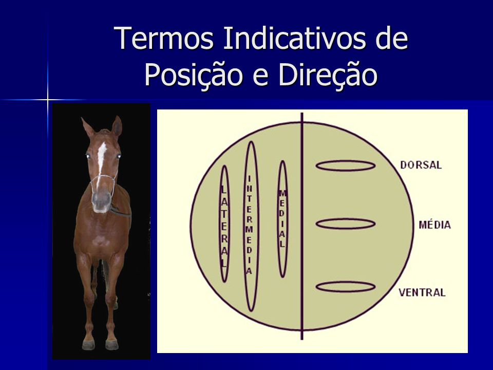 Termos Indicativos de Posição e Direção
