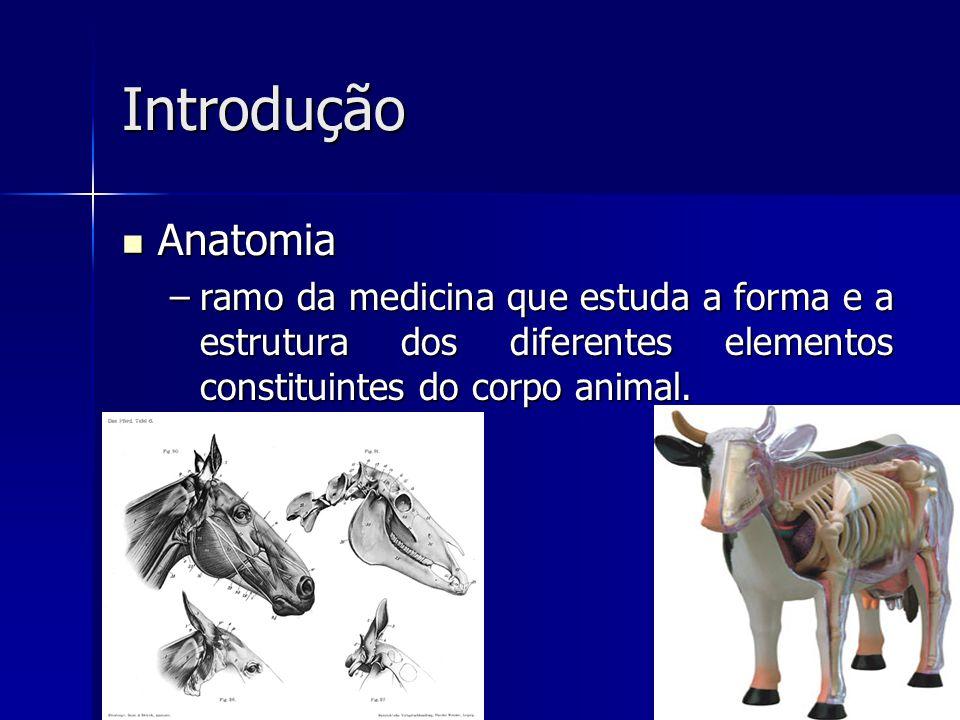 Introdução Anatomia.
