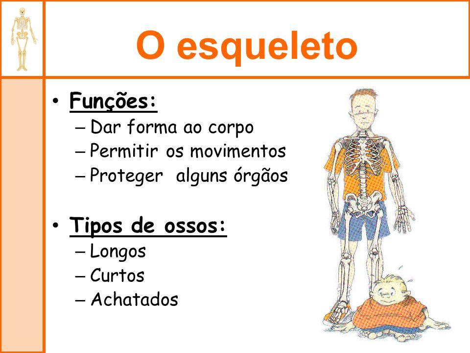 O esqueleto Funções: Tipos de ossos: Dar forma ao corpo