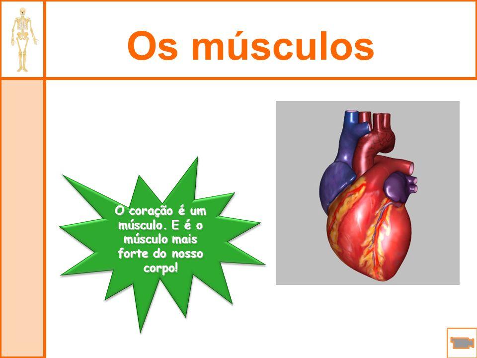 O coração é um músculo. E é o músculo mais forte do nosso corpo!