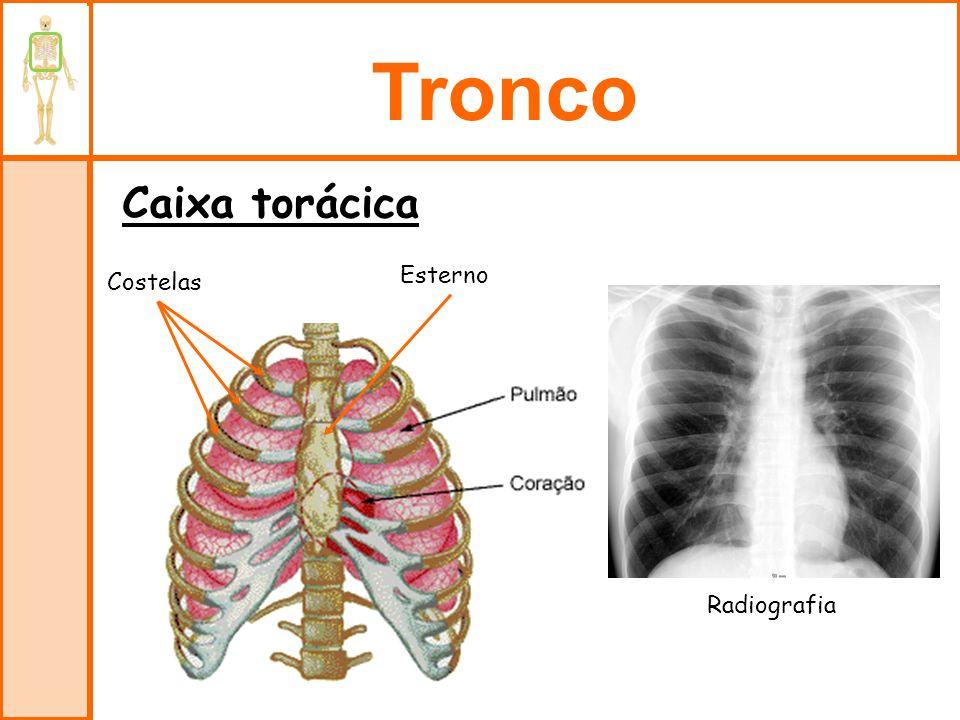 Tronco Caixa torácica Esterno Costelas Radiografia