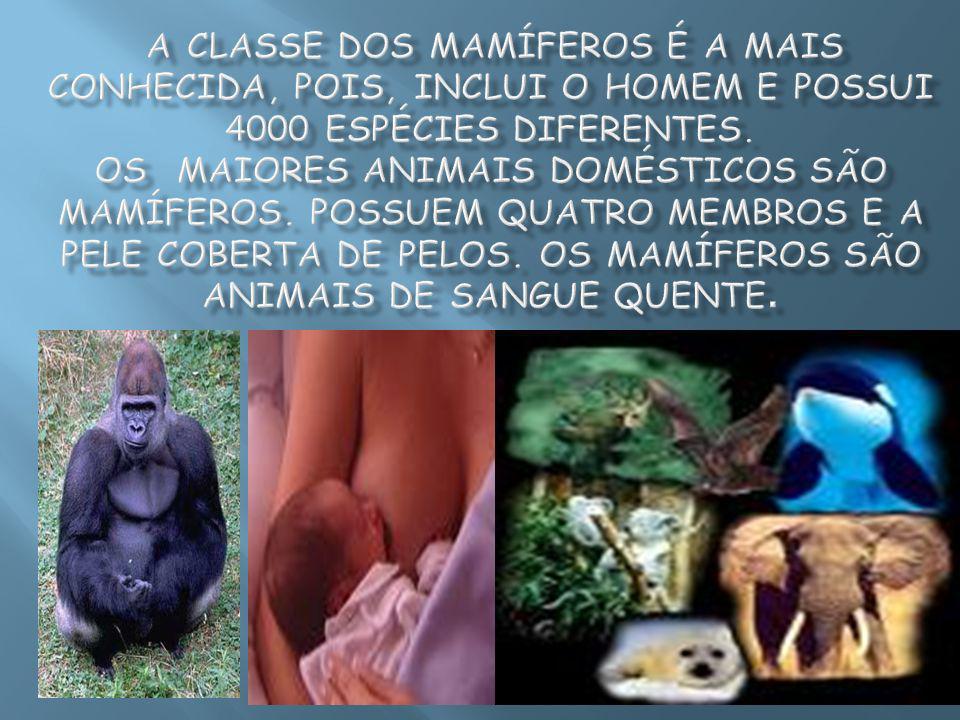 A classe dos mamíferos é a mais conhecida, pois, inclui o homem e possui 4000 espécies diferentes.