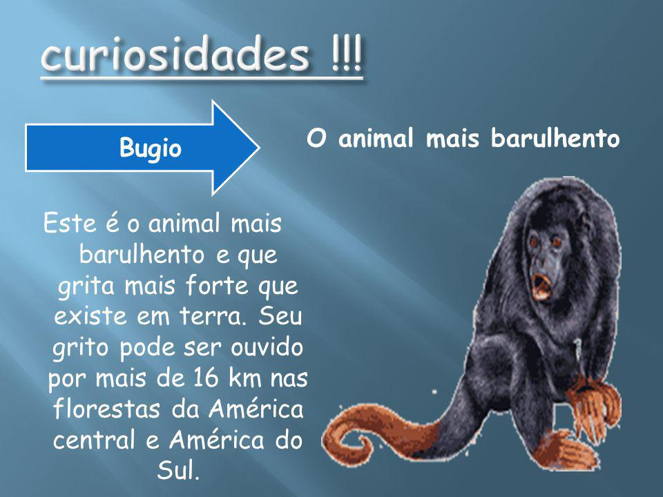 O animal mais barulhento