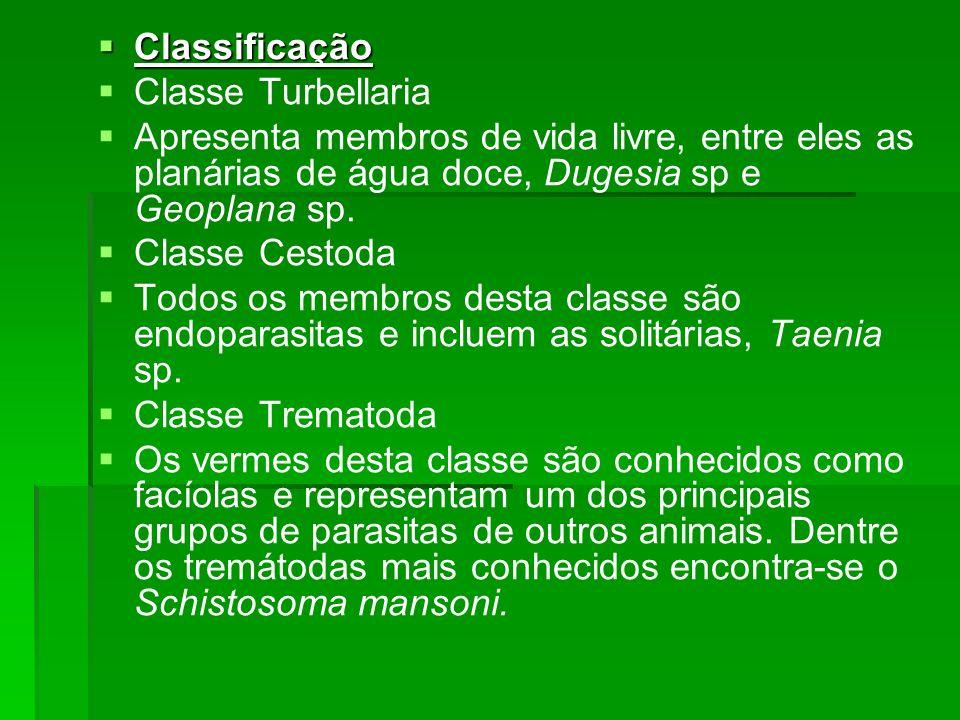 Classificação Classe Turbellaria. Apresenta membros de vida livre, entre eles as planárias de água doce, Dugesia sp e Geoplana sp.