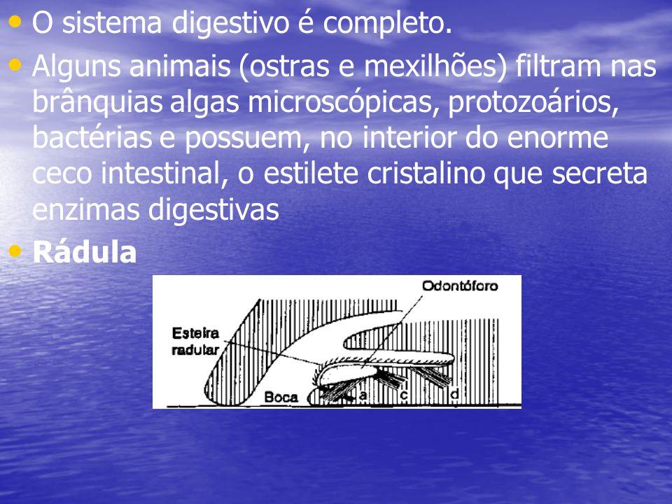 O sistema digestivo é completo.