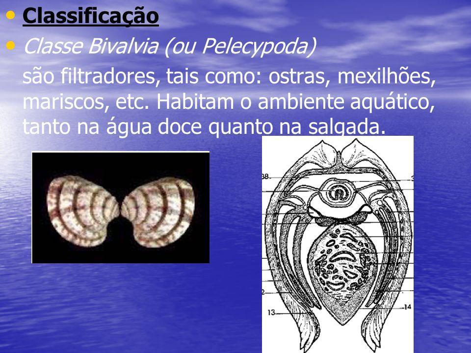 Classificação Classe Bivalvia (ou Pelecypoda)