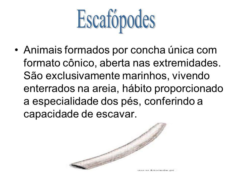Escafópodes