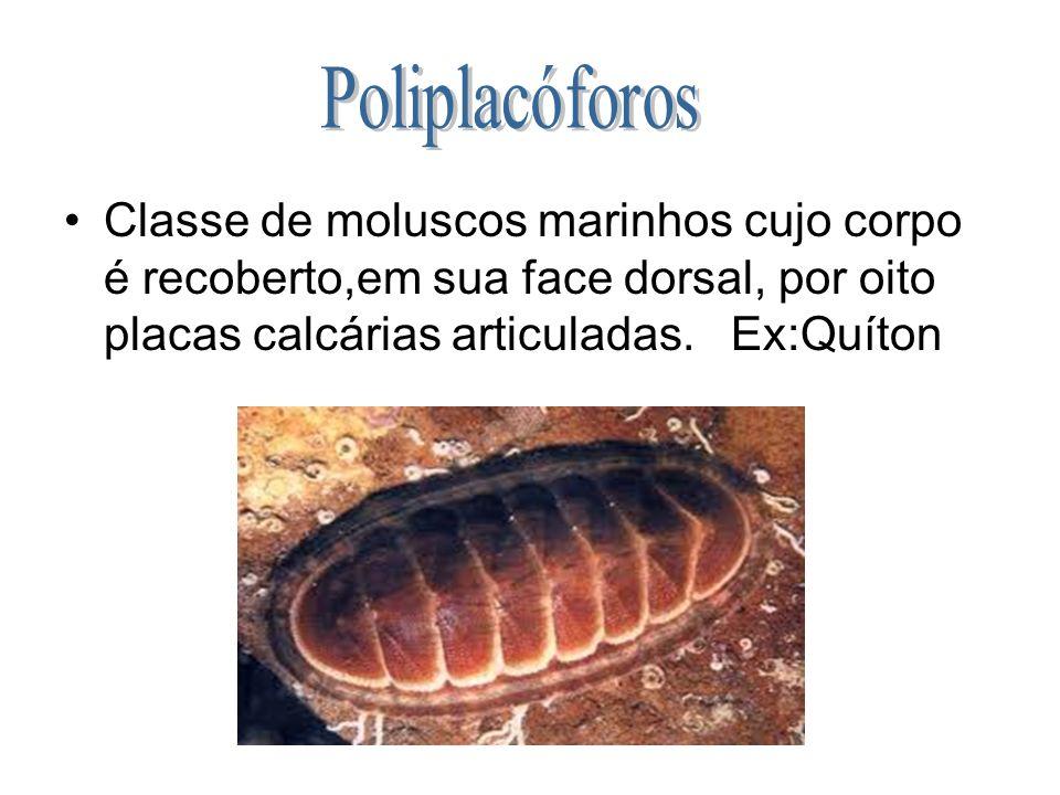 Poliplacóforos Classe de moluscos marinhos cujo corpo é recoberto,em sua face dorsal, por oito placas calcárias articuladas.