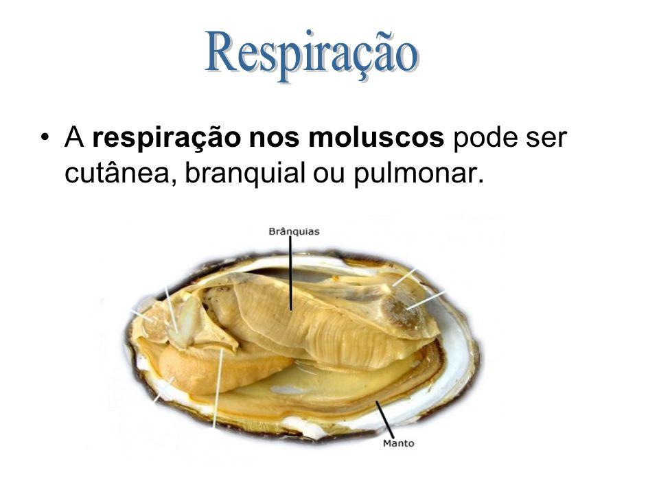 Respiração A respiração nos moluscos pode ser cutânea, branquial ou pulmonar.