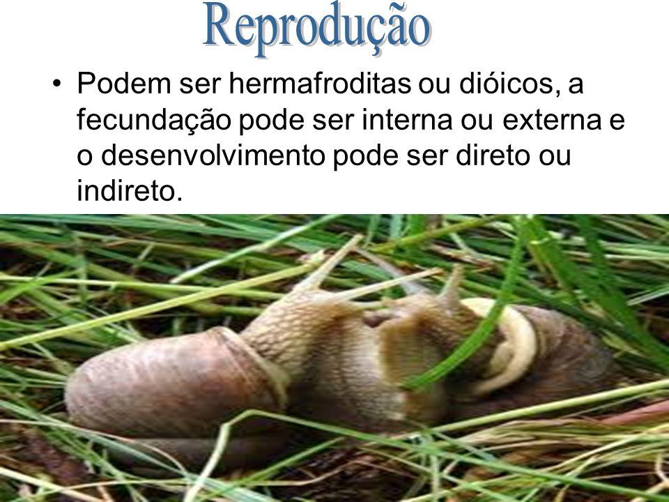 Reprodução Podem ser hermafroditas ou dióicos, a fecundação pode ser interna ou externa e o desenvolvimento pode ser direto ou indireto.