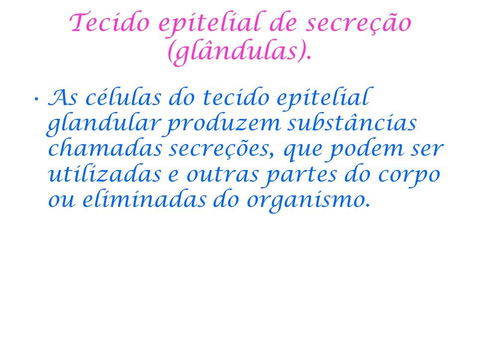 Tecido epitelial de secreção (glândulas).