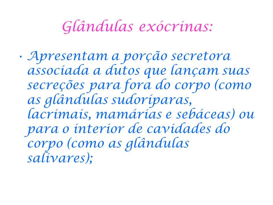 Glândulas exócrinas: