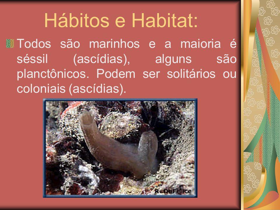 Hábitos e Habitat: Todos são marinhos e a maioria é séssil (ascídias), alguns são planctônicos.