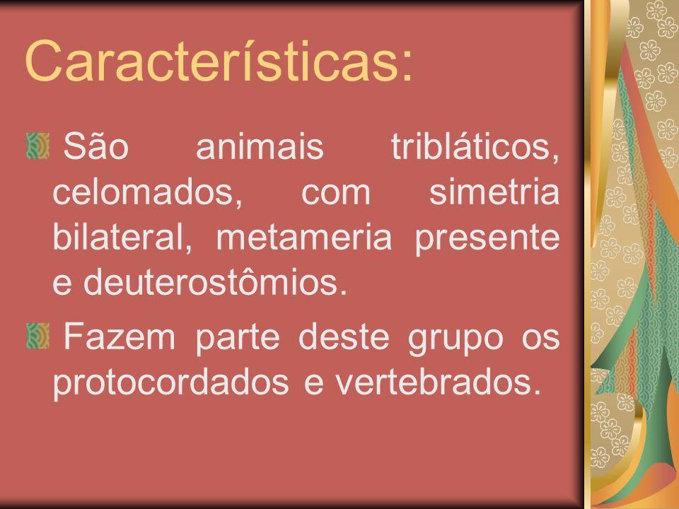 Características: São animais tribláticos, celomados, com simetria bilateral, metameria presente e deuterostômios.