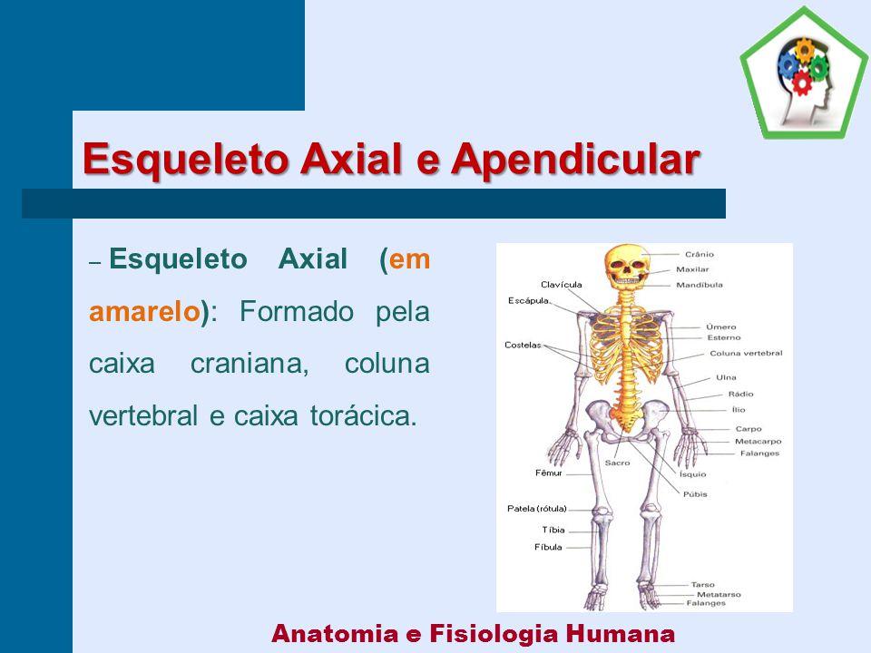 Famoso Capítulo 11 Anatomía Y Fisiología Humana Inspiración ...