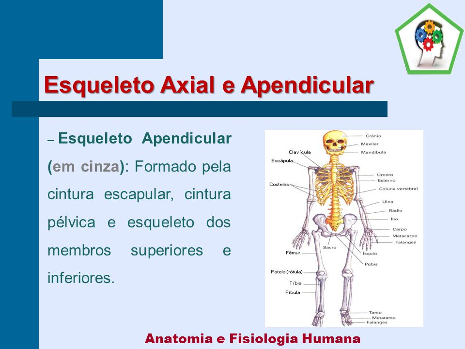 Anatomia e Fisiologia Humana