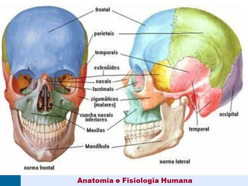 Dorable Anatomía Y Fisiología Humana Composición - Anatomía de Las ...