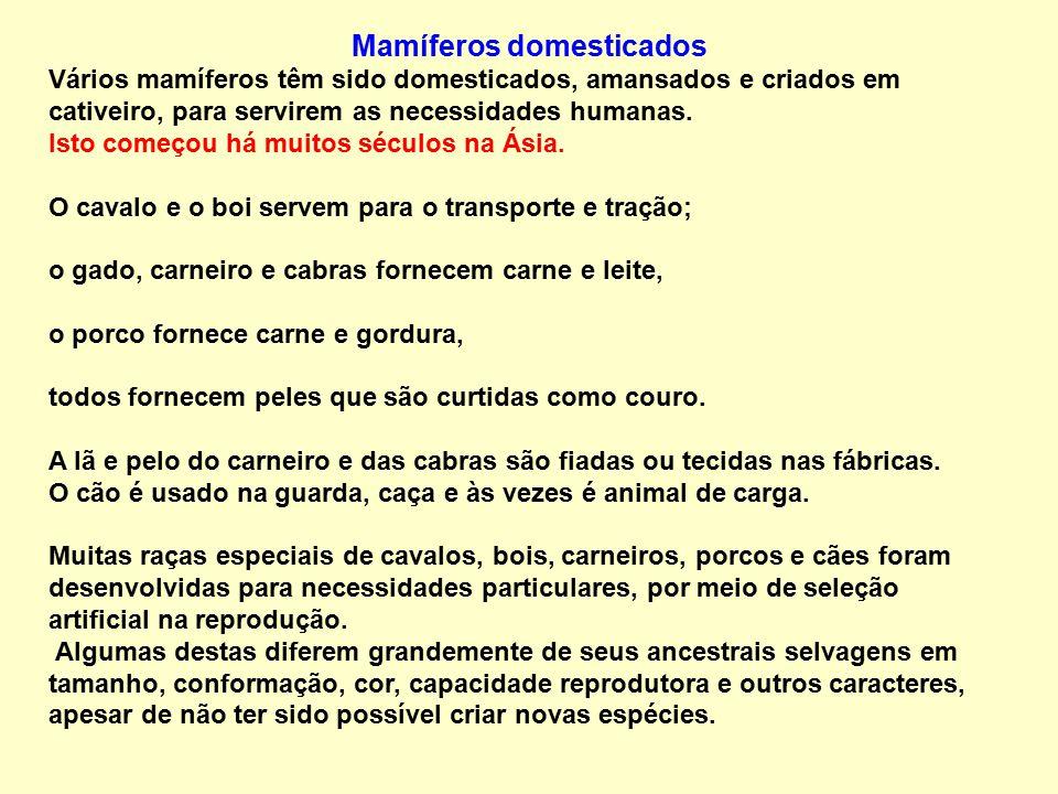 Mamíferos domesticados