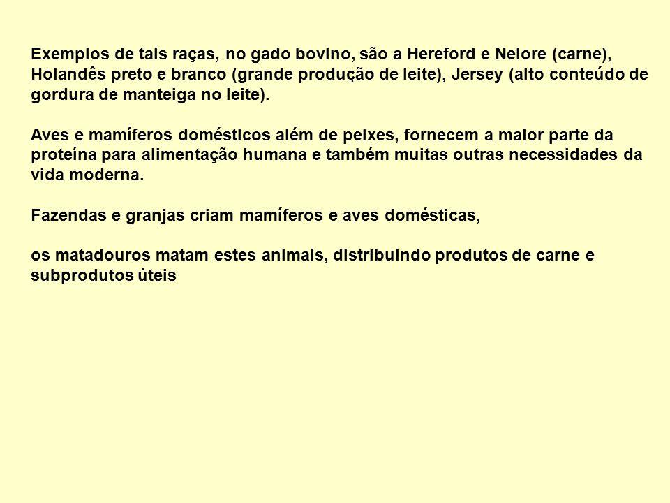 Exemplos de tais raças, no gado bovino, são a Hereford e Nelore (carne), Holandês preto e branco (grande produção de leite), Jersey (alto conteúdo de gordura de manteiga no leite).