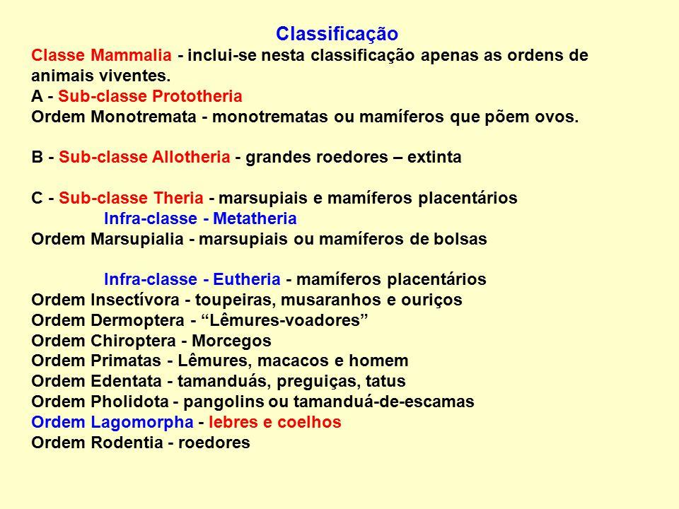 Classificação Classe Mammalia - inclui-se nesta classificação apenas as ordens de animais viventes.