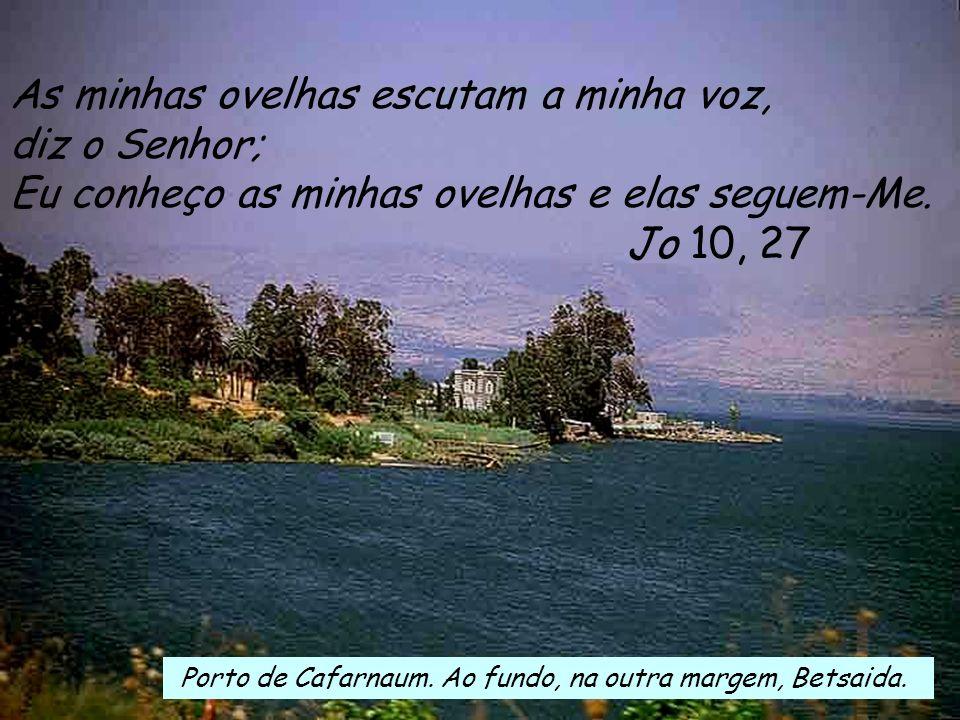 Jo 10, 27 As minhas ovelhas escutam a minha voz, diz o Senhor;