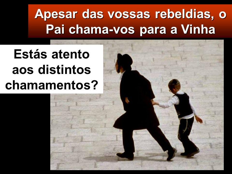 Apesar das vossas rebeldias, o Pai chama-vos para a Vinha