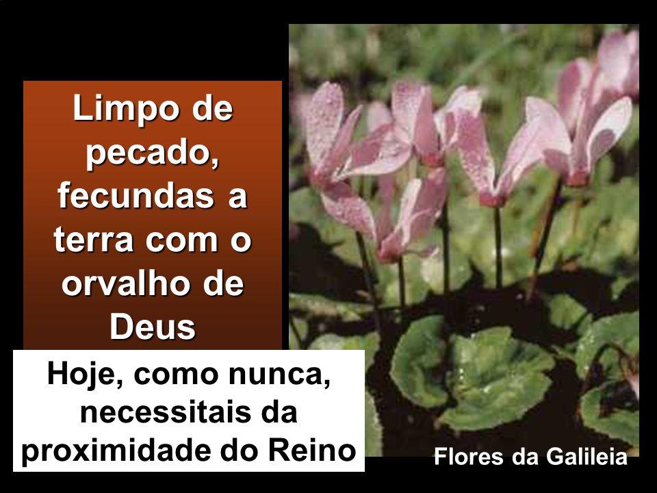 Limpo de pecado, fecundas a terra com o orvalho de Deus