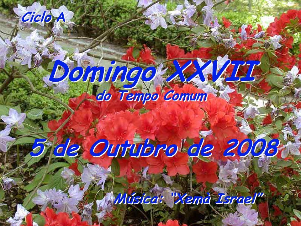 Domingo XXVII 5 de Outubro de 2008 do Tempo Comum