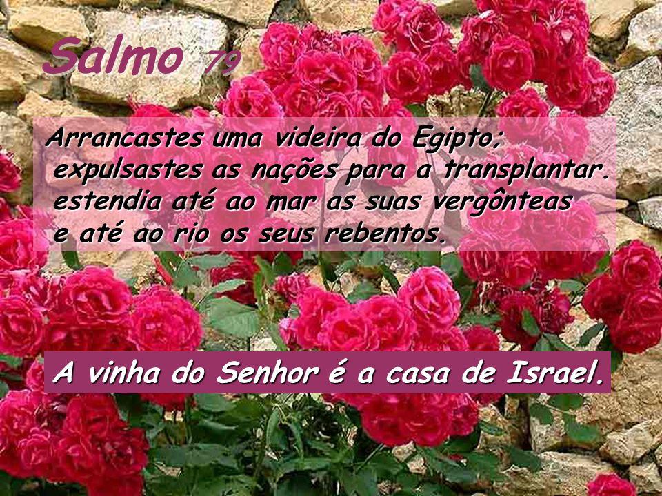 Salmo 79 A vinha do Senhor é a casa de Israel.
