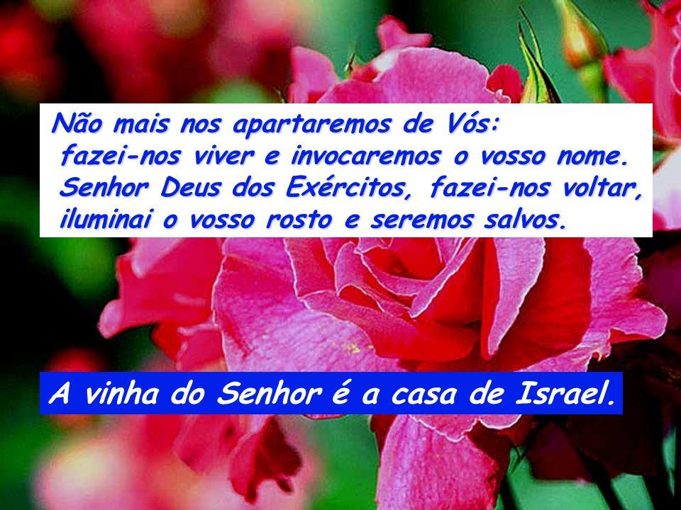 A vinha do Senhor é a casa de Israel.
