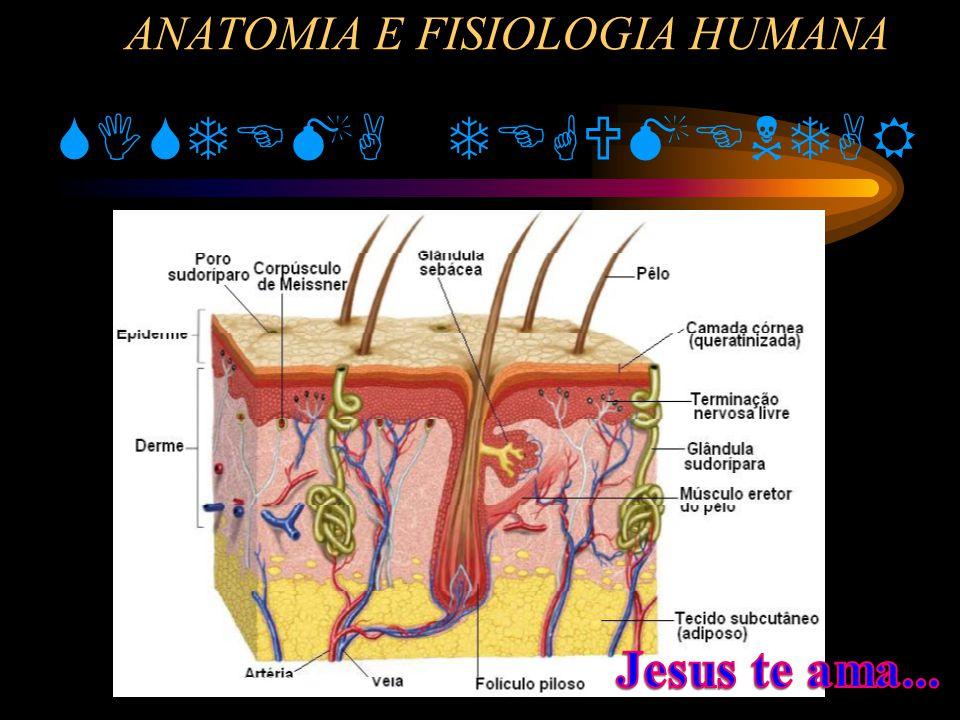 Anatomia e fisiologia da pele humana