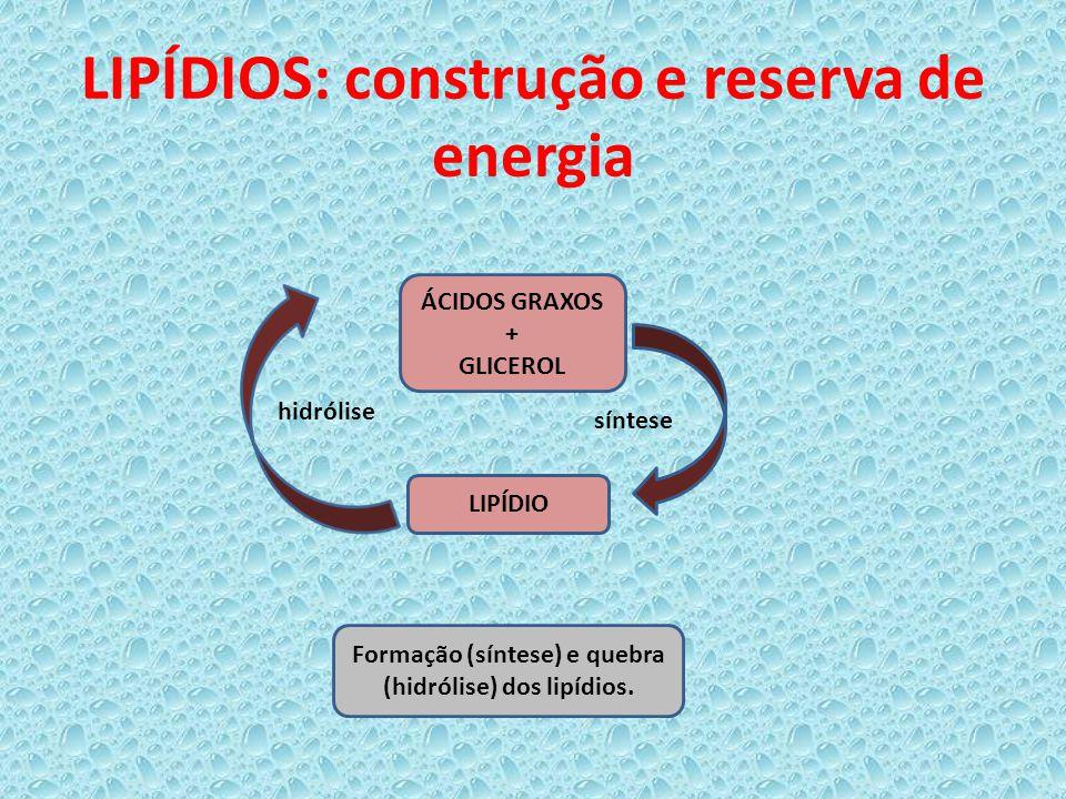 LIPÍDIOS: construção e reserva de energia
