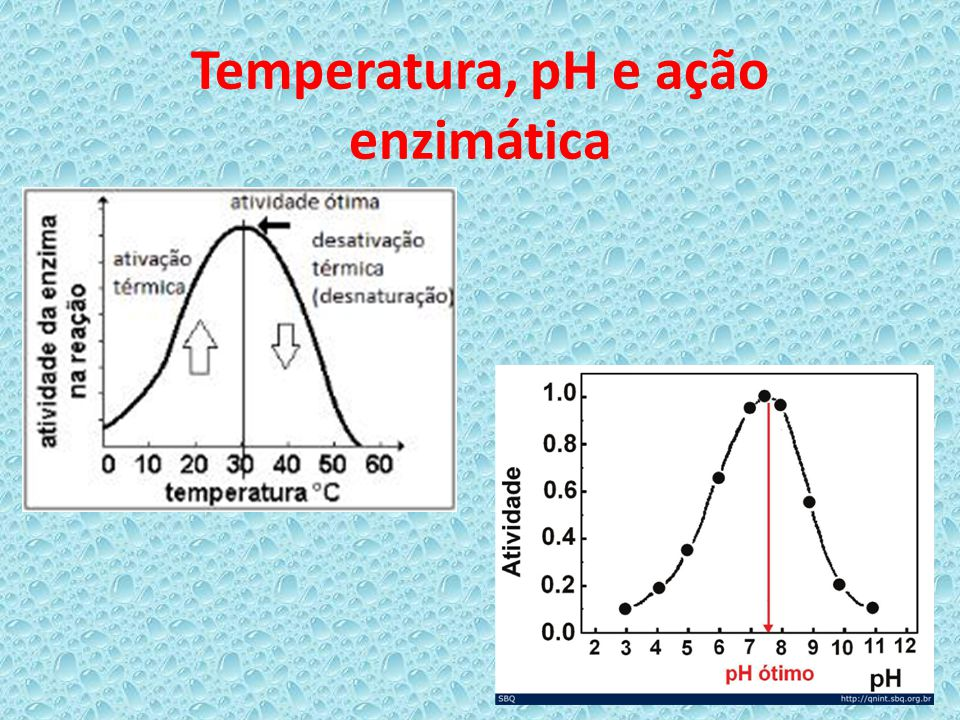 Temperatura, pH e ação enzimática