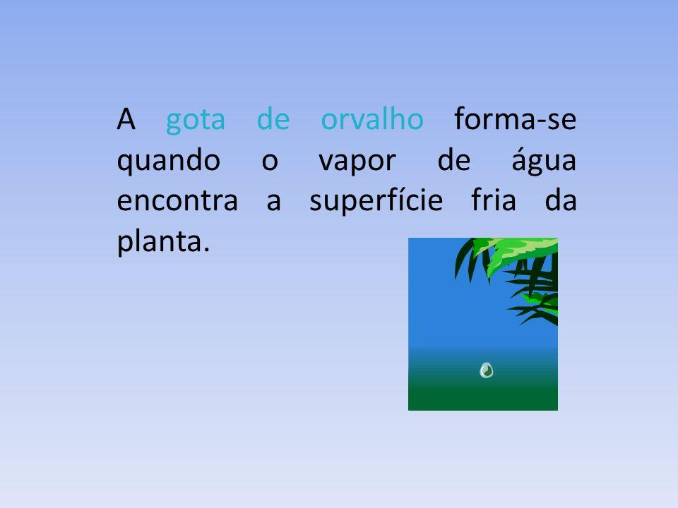 A gota de orvalho forma-se quando o vapor de água encontra a superfície fria da planta.
