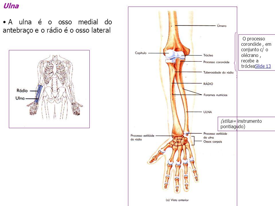 Divis o do esqueleto esqueleto axial esqueleto apendicular for O osso esterno e dividido em