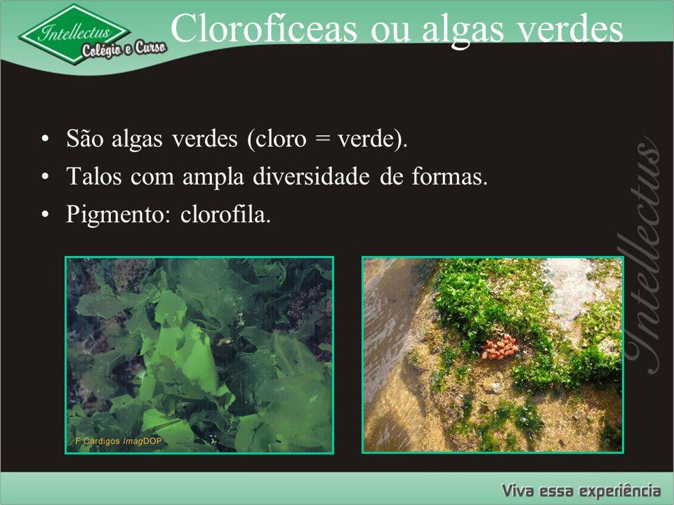 Clorofíceas ou algas verdes