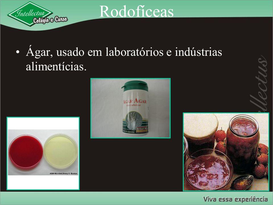 Rodofíceas Ágar, usado em laboratórios e indústrias alimentícias.