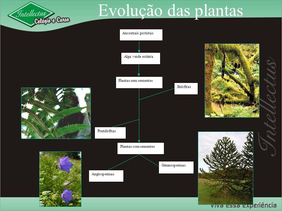 Evolução das plantas Ancestrais protistas Alga verde extinta