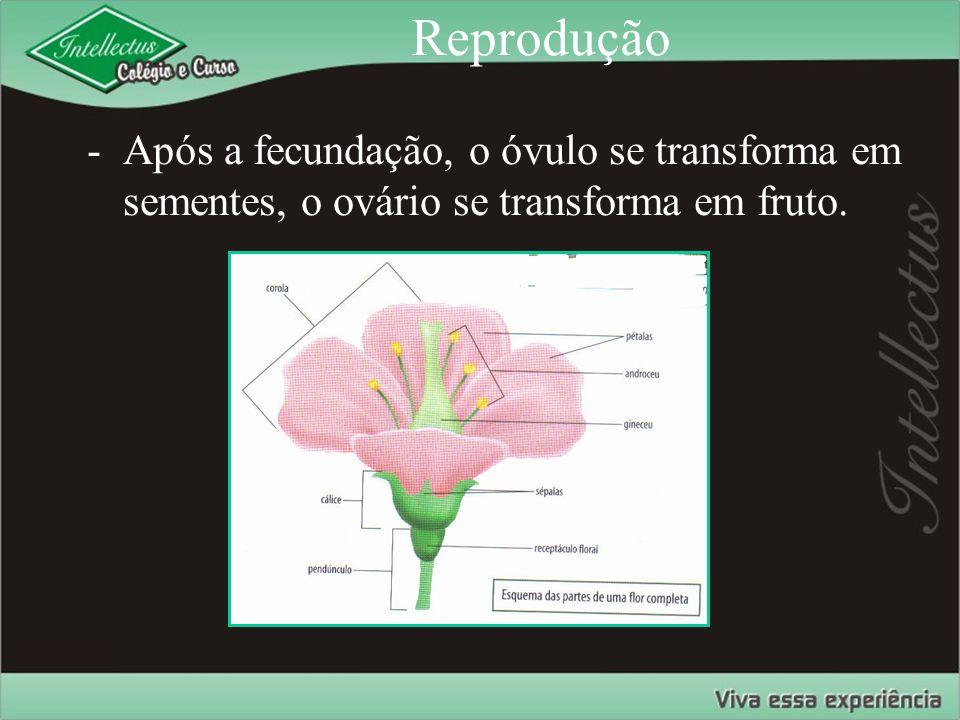 Reprodução Após a fecundação, o óvulo se transforma em sementes, o ovário se transforma em fruto.